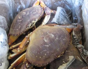 box-of-crabs2