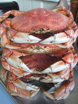 stacked-crabs3